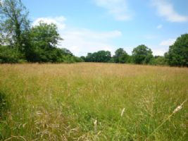 3 Acres Land and Stream Situated in Peaceful Countryside in South Cher (18)