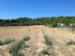 Your own Building Land in BIZE MINERVOIS