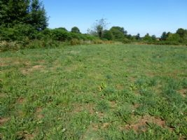 Exciting Opportunity To Buy  5 Acres of Building Land Set In Stunning Countryside.