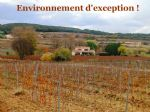 * Wine Domaine near Pezenas with 6.5 hectares vines, 5 bed house and pool!