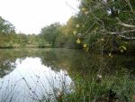 Beautiful lake of approx 1.5 acres set in Woodland and Pastureland of 7.5 acres