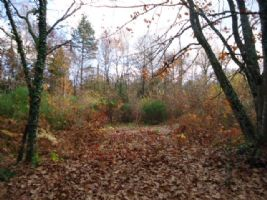 Building plot for sale in wooded, secluded location