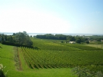 Vineyard 45 mn from Bordeaux