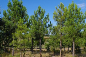 Forest area of 80 hectares!