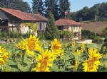 Gascon farmhouse with large outbuilding, pool and over one hectare of