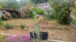 Town house with garden, in need of renovation - in PONT EVEQUE