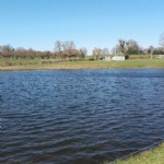 Pretty fishing pond