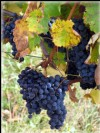 BORDEAUX Superb château and vineyard