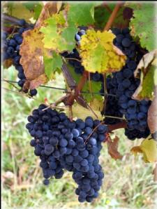 Bordeaux wine estate of 22ha