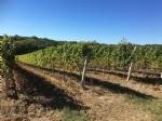 Vineyard property close to Bordeaux