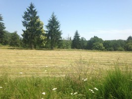 Land of 2.7Ha in the Périgord Vert - NON-constructible, partly wooded
