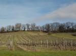 AOC Bergerac vines in production