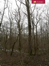 Woodland of 8,7 hectares