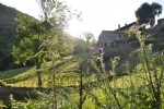 *Character stone detached properties (x2) with gites set in 23 hectares surrounded by nature