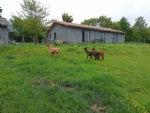 New Build Villa with 5 Hectares of Land and Alpaca Farm