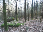 Forest / wood on 5.76 hectares