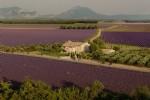 Lavender fields Mas,2 gîtes, studio, olive groves, truffle oaks and vines et voila Provence!