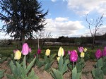 Property on approximately 3ha600 with a pond of 1 ha700 wooded and fully enclosed